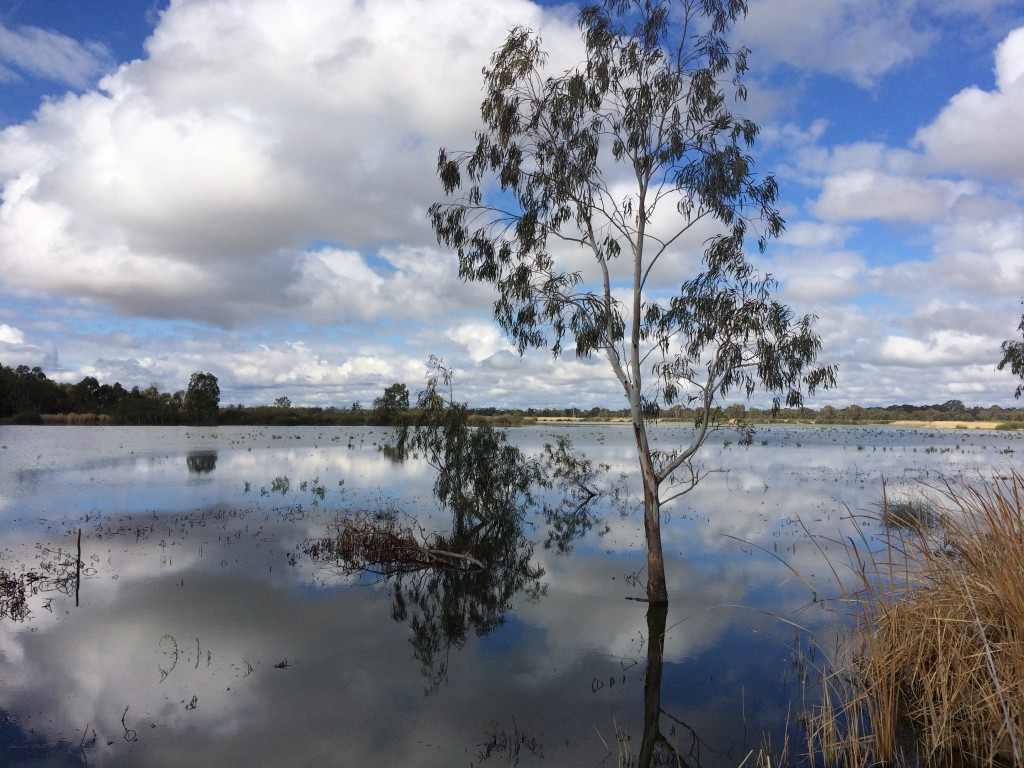 A trip to Banrock Station Wetland Complex offered water and wine (Photo: Adam Gerace).